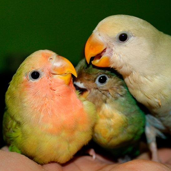 consultas-aves