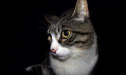 gato-perfil