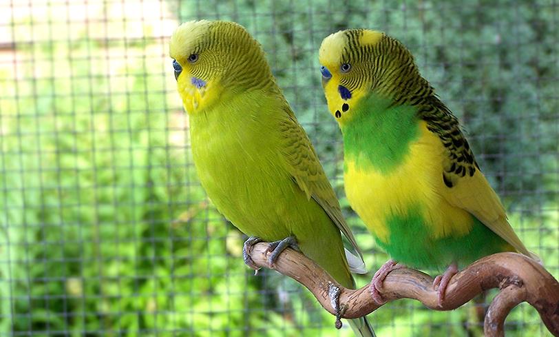 Enfermedades en las aves
