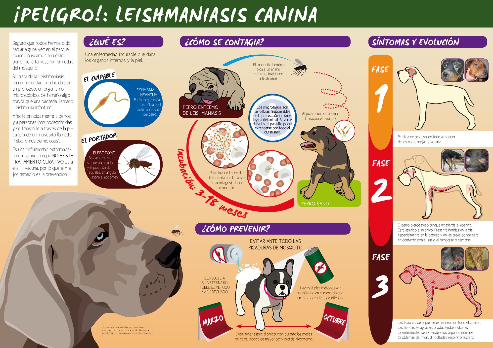 Campaña contra la Leishmania