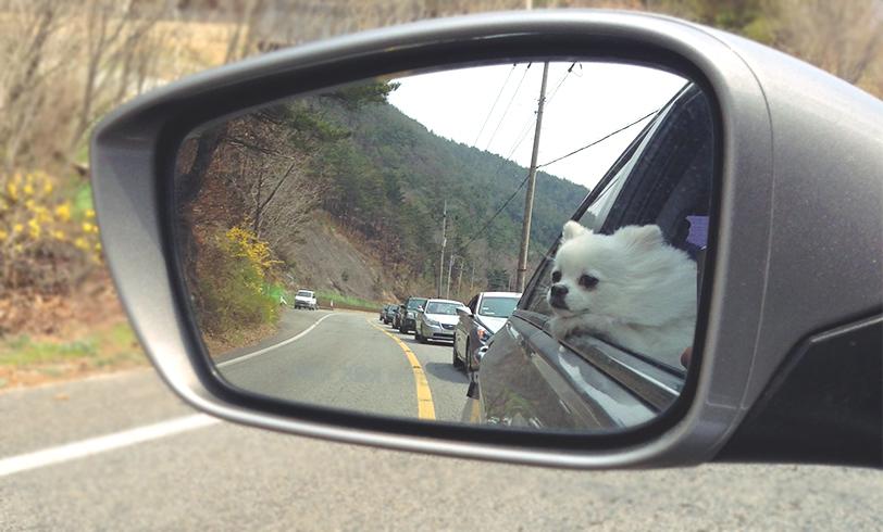 La seguridad en el coche