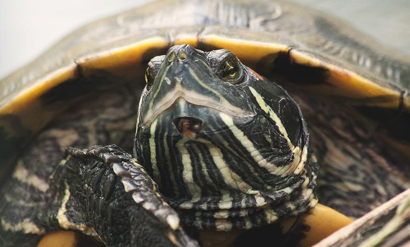 Cuidados básicos para las tortugas de agua