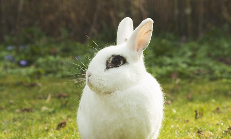 La correcta alimentación de los conejos
