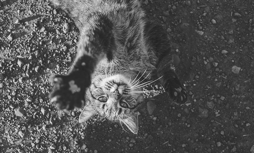 Mitos comunes sobre los gatos