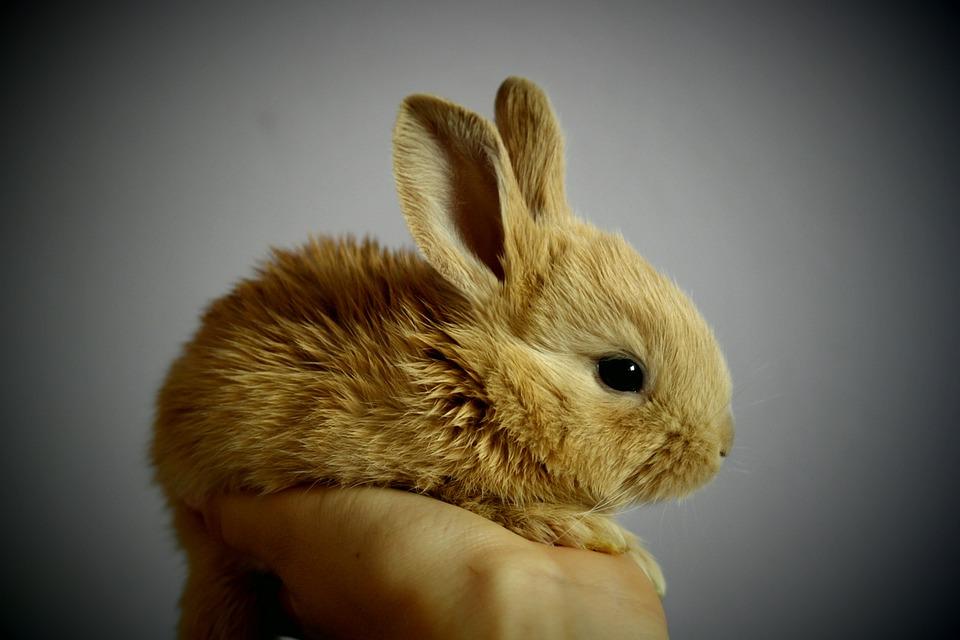 Los cuidados de los conejos