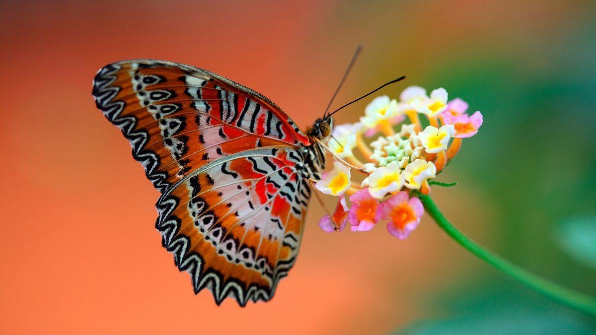 De gusano a mariposa