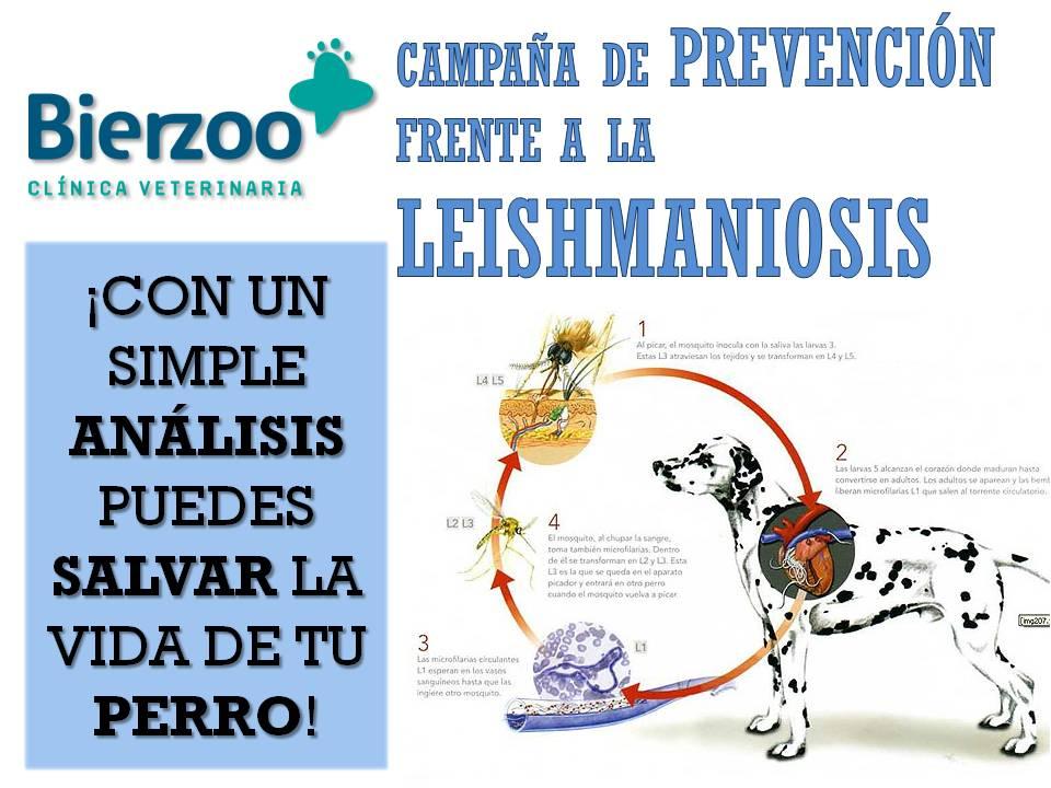Campaña de vacunación frente a la Leishmaniosis