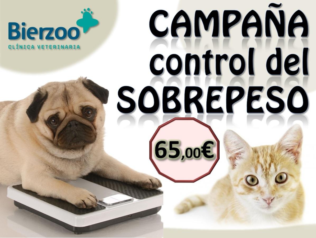 Campaña control del sobrepeso en perros y gatos